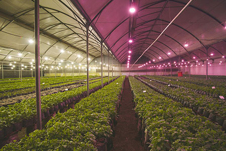 Philips introduces the next generation of energy efficient LED flowering lamps.
