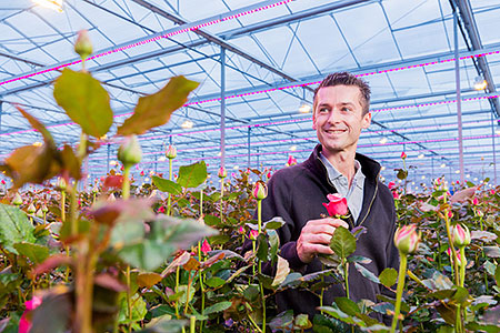 Dutch and Belgian rose growers expand use of Philips horticultural LED lighting after 50 percent surge in crop yields