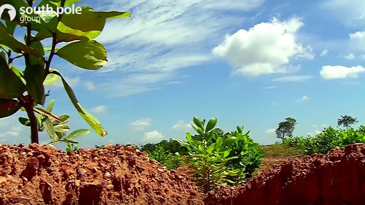 Reforestation in northern Colombia