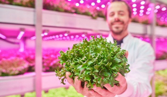 4 remarkable results you can achieve with dynamic LED grow lights in a vertical farm