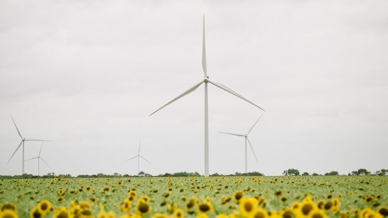 windmills in sunflower field