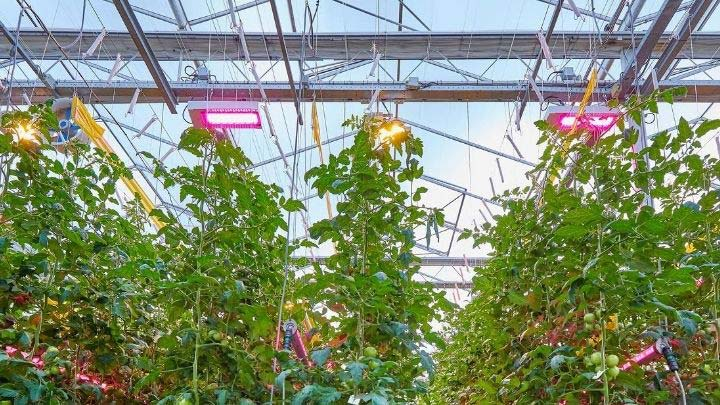 Horticultural lighting for sustainable food production