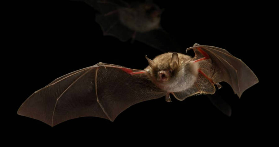 The World S First Bat Friendly Street Lighting Signify