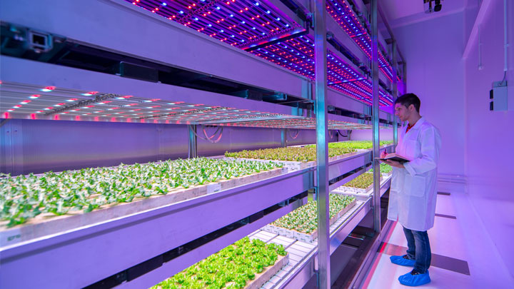 Vertical Farming, a sustainable innovation