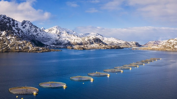 Aquaculture LED lighting optimizing growth results and improving fish welfare