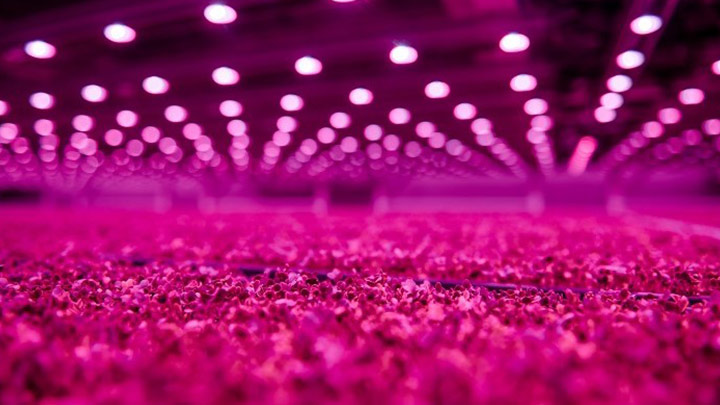 Increase year-round food production with LED lighting