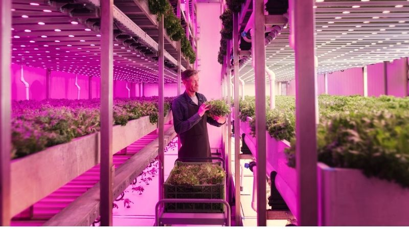Growing food with light recipes from Signify