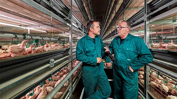 The science of poultry lighting for broiler growers