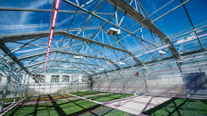 700,000 square feet of greenhouses