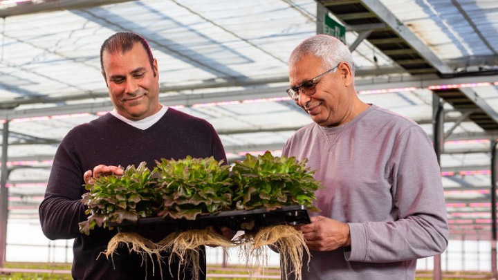 Grower reduces production time with Philips LEDs